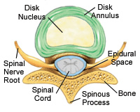 Disc Anatomy
